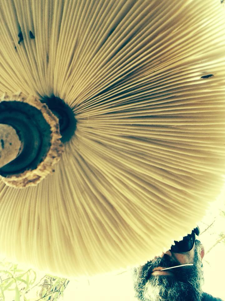 cogumelo_igor