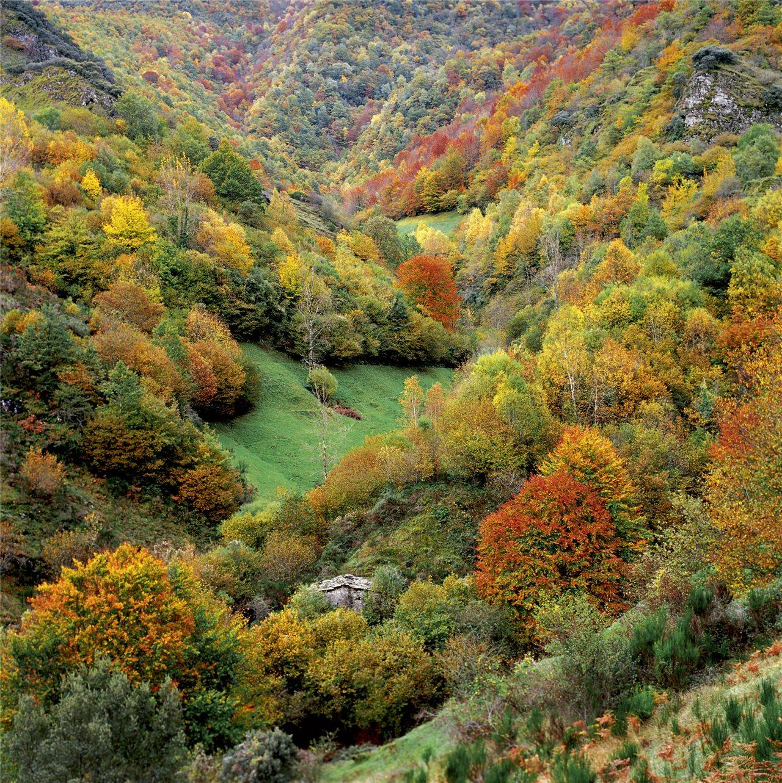 Outono no Courel  National Geographic